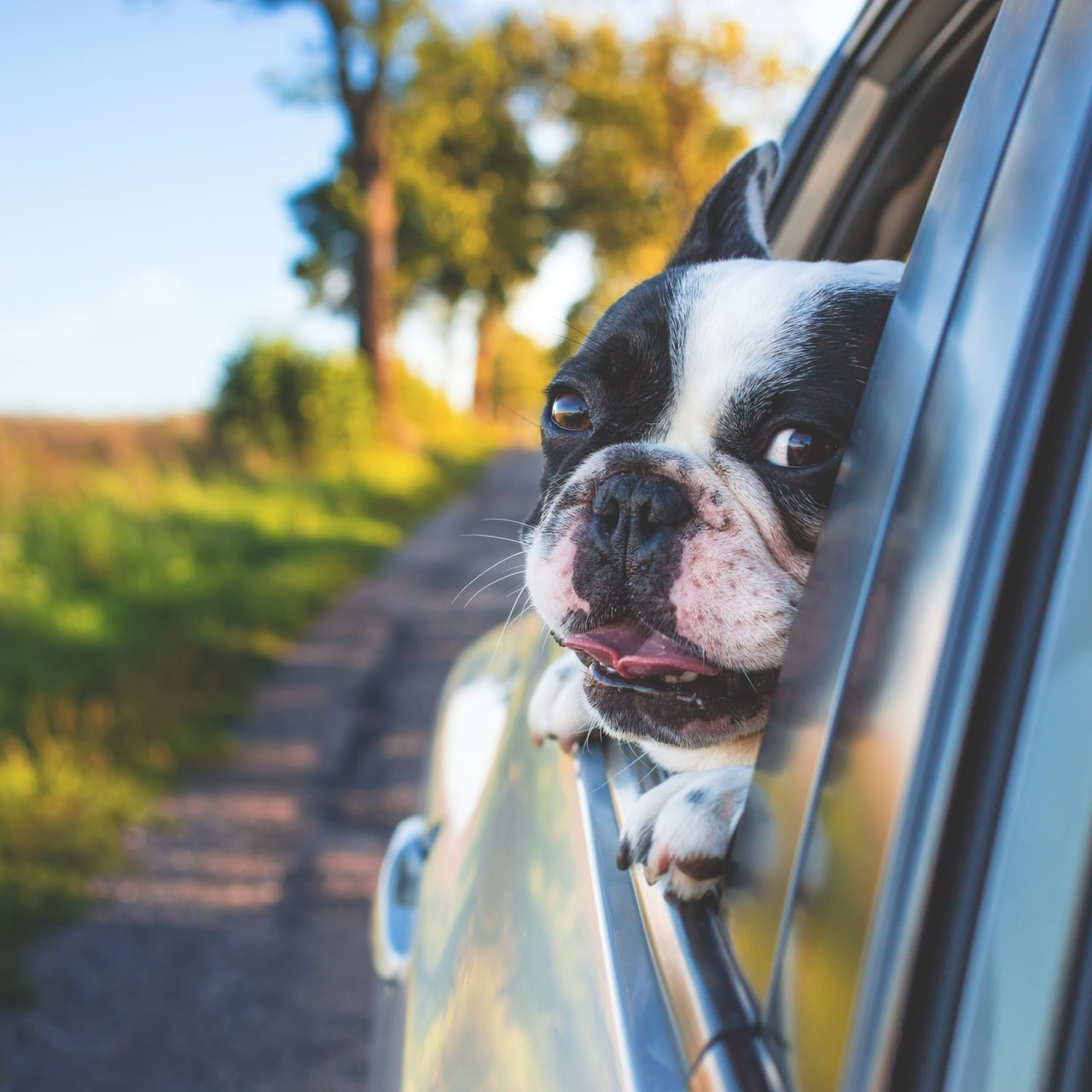 Dog sticking its head out car window for commitment to environment on services page, Dent Busters in Tucson, Arizona